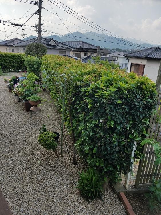 これは家の内側から撮った写真です。植木も伐採してスッキリしました。